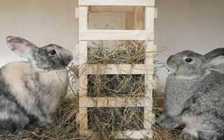 Чем можно кормить кроликов в домашних условиях список