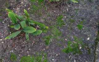 Как избавиться от мха на садовом участке