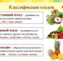 Какие растения образуют плоды