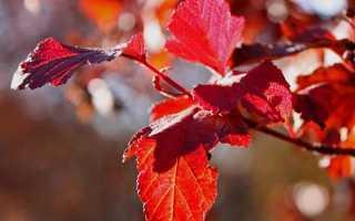 Какие декоративные кустарники можно сажать осенью