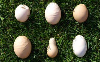 Тонкая скорлупа у куриных яиц чем кормить