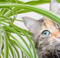 Как защитить домашние цветы от кошки