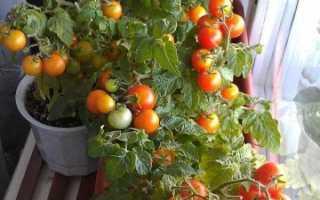 Можно ли вырастить томаты на подоконнике