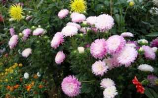Какие цветы цветут в августе