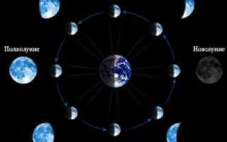 Что можно сажать при растущей луне
