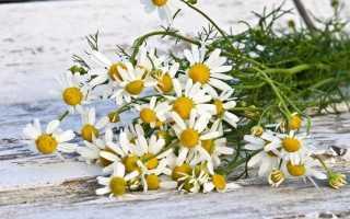 Какие пряные травы можно сажать под зиму