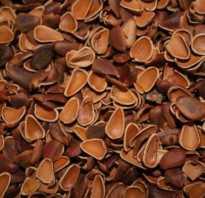 Кедровая шелуха польза и вред в огороде