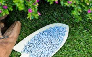 Можно ли капусту попугаю волнистому