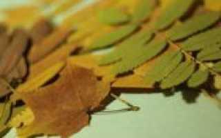 Как сушить листья для гербария