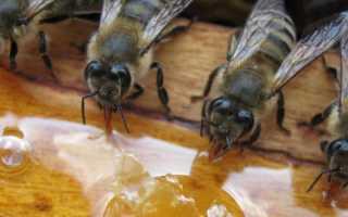 Сколько уксуса добавить в сироп для пчел