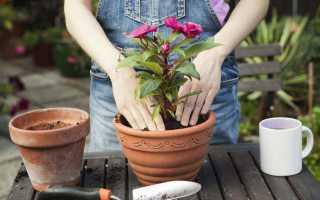 Можно ли в новолуние пересаживать цветы