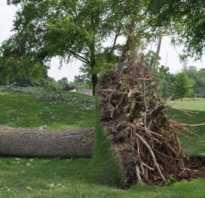 Как выкорчевать корни деревьев на участке