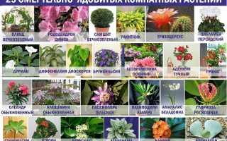Можно ли держать вьющиеся цветы дома