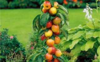 Какие плодовые деревья бывают колоновидные