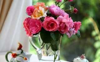 Как вырастить розы из ростков