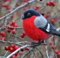Каких птиц ты видел осенью