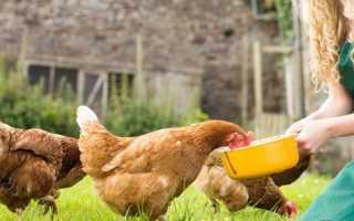 Норма расхода корма на 1 курицу несушку
