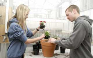 Как правильно пересаживать цветы