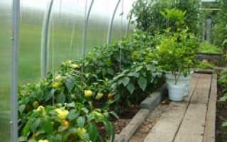 Как в теплице расположить растения