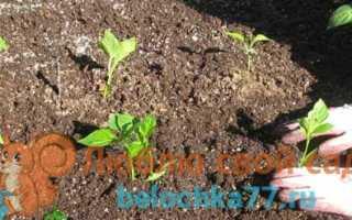 Как посадить перцы после огурцов