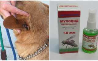 Мухи съедают уши у собаки что делать