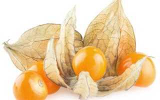 Что такое физалис и как его едят