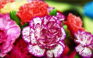 Какие многолетники цветут все лето до осени