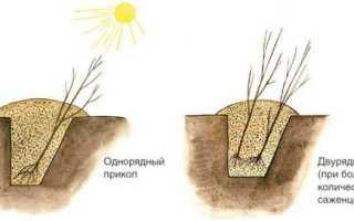 Как правильно прикопать осенью саженцы