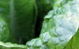 Чем можно заменить шпинат в рецепте