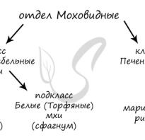 К царству растений не относятся мох сфагнум