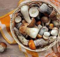 Сколько можно хранить консервированные грибы