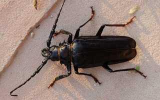 Как избавиться от древесного жука в доме