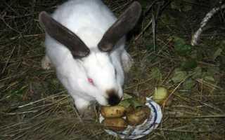 Можно ли давать вареную картошку кроликам
