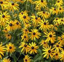 Как называются цветы желтые
