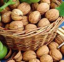 Как собирать орехи грецкие