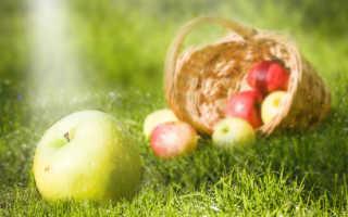 Яблоки падалица как использовать
