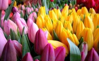 Можно ли в холодильнике хранить тюльпаны