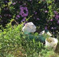 Как очистить участок от сорняков