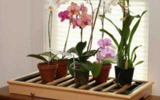 Орхидея в горшке уход в домашних условиях
