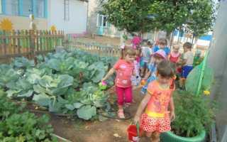 Проект огорода и грядок в детском саду
