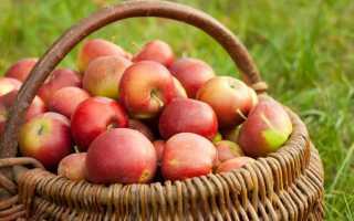 Сколько надо яблок для 1 литра сока