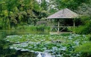 Как сделать озеро из болота