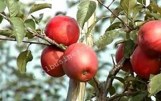 Урожайность яблок с 1 га в россии