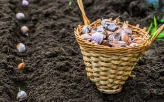 Как подготовить почву под чеснок осенью