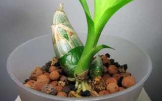 Орхидея как растет в природе