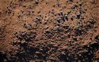 Если кислая почва на участке что делать