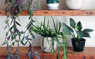 Можно ли сажать цветы в кашпо без отверстия