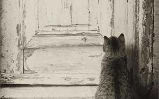 Если к дому прибилась кошка это к чему