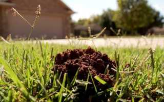 Кто оставляет дыры в земле в огороде