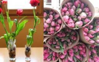Тюльпаны дома в горшке к 8 марта
